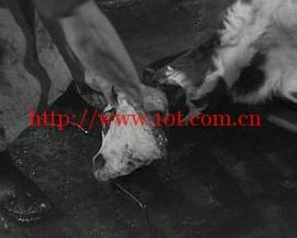 动物之血 Le Sang des bêtes (1949)