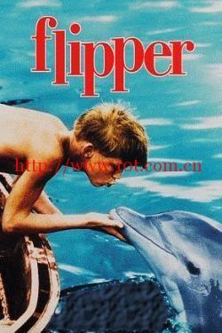 海豚飞宝 Flipper (1963)