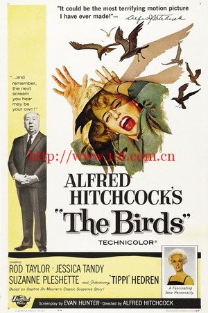 群鸟 The Birds (1963)